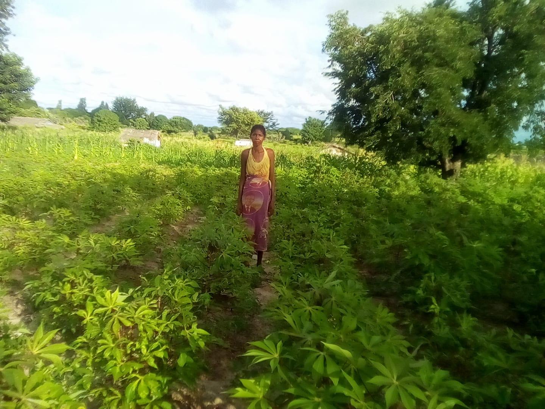 culture de manioc et d'arachides