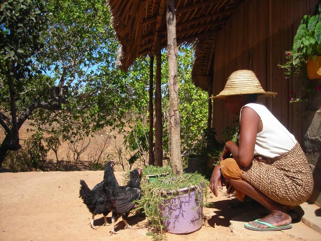 les oeufs de quelques poules permettent d'acheter à manger