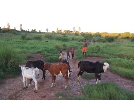 D'autres enfants gardent des chèvres ou des zébus