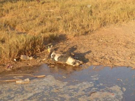 La marée charrie toutes sortes de déchets, parfois des cadavres d'animaux en décomposition