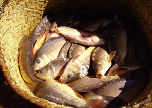 La maman de Solo écoule les poissons sur le marché de Mahabibo. Elle s'approvisionne chaque matin auprès des pêcheurs.